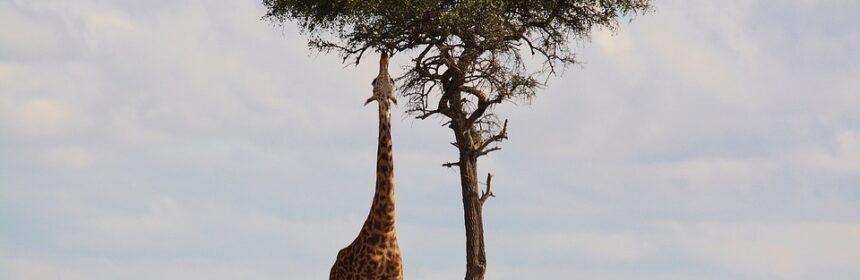 Afrika Steppe